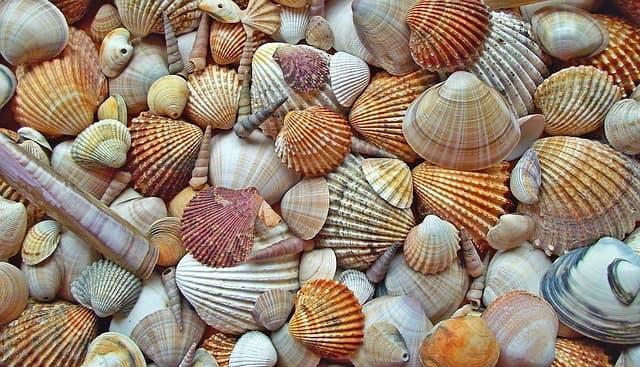 cochas-marinas-yemayá