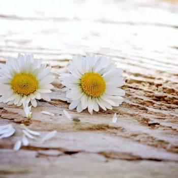 Flores-Blancas-yemaya